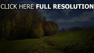 gras hügel bäume hain wolke himmel feld