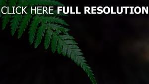 blatt farn gras zweig pflanze