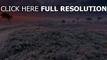 winter feld gras bäume frost schnee frost sonnenuntergang