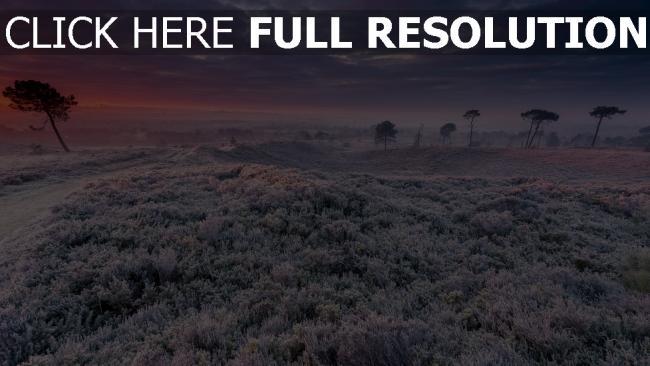 hd hintergrundbilder winter feld gras bäume frost schnee frost sonnenuntergang