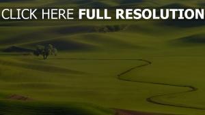 hügel bäume gras grün gullys