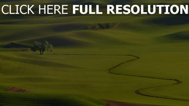 hd hintergrundbilder hügel bäume gras grün gullys