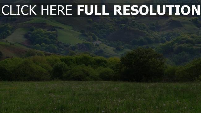 hd hintergrundbilder berge ebenen gras sommer bäume wiese