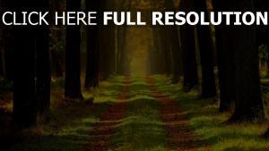 pfad bäume gehweg holz gras