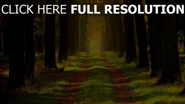 hd hintergrundbilder pfad bäume gehweg holz gras