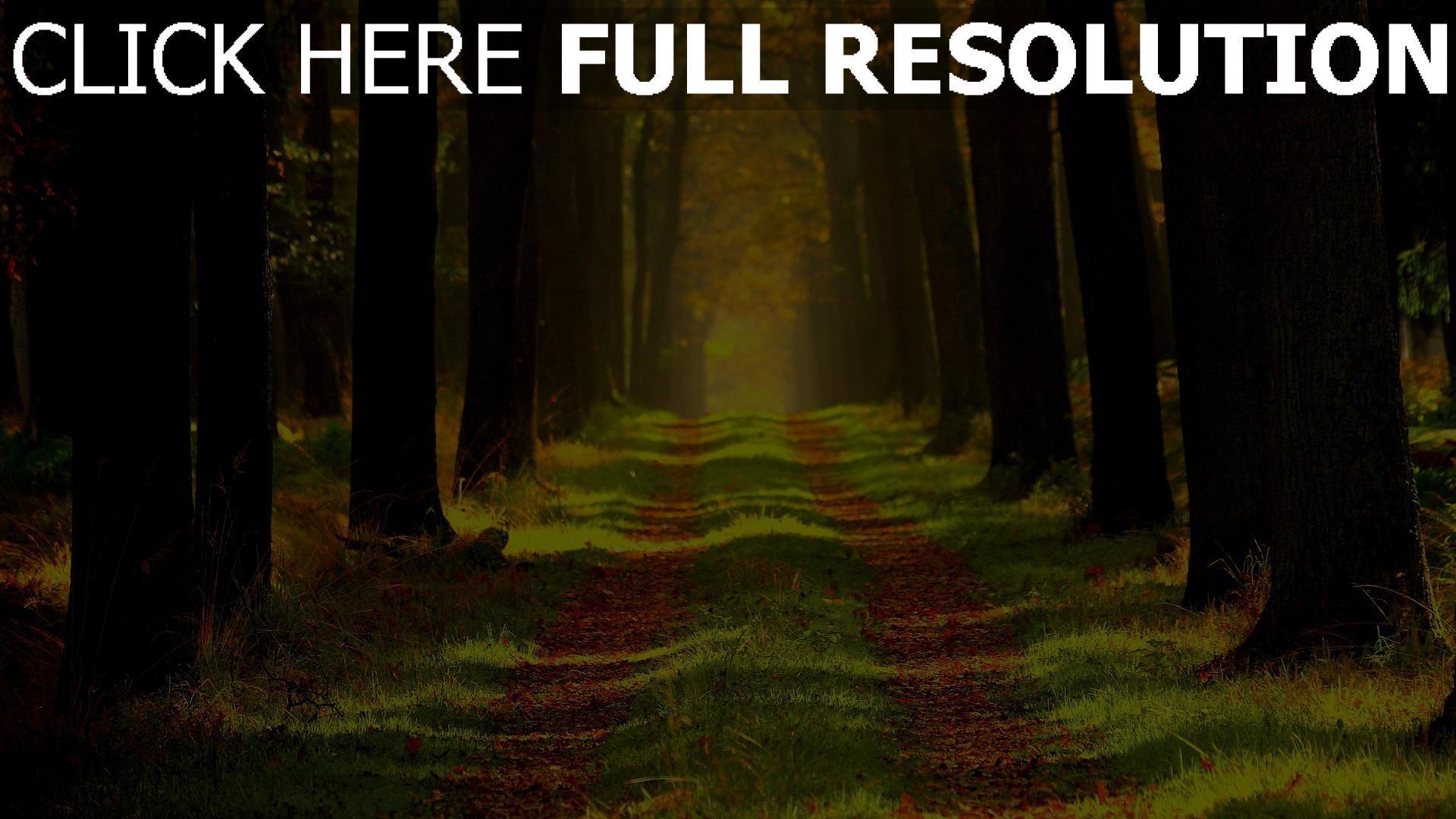 hd hintergrundbilder pfad bäume gehweg holz gras 1920x1080