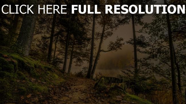 hd hintergrundbilder dunst wald bäume gras hdr