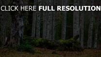 wald bäume holz blätter erde moos
