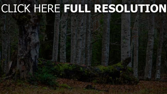 hd hintergrundbilder wald bäume holz blätter erde moos