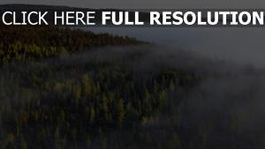himmel nebel tanne wald bäume hohe