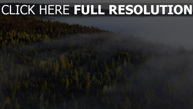 hd hintergrundbilder himmel nebel tanne wald bäume hohe