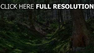 bäume kiefern moos erde holz