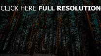 wald kiefer bäume himmel