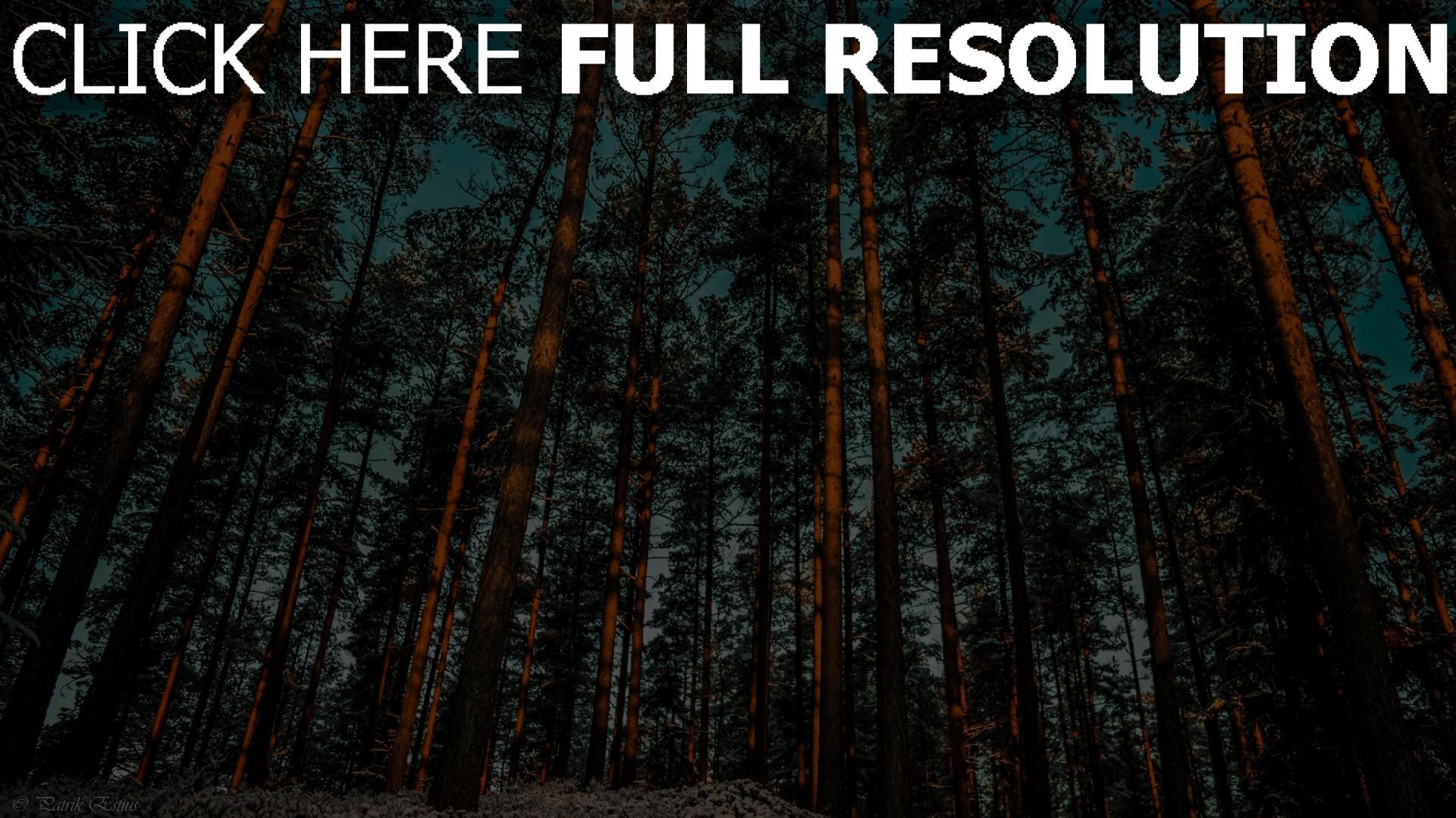 hd hintergrundbilder wald kiefer bäume himmel 1920x1080