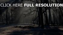 bäume wald winter frost kälte licht