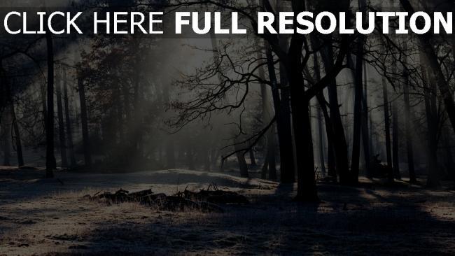 hd hintergrundbilder bäume wald winter frost kälte licht