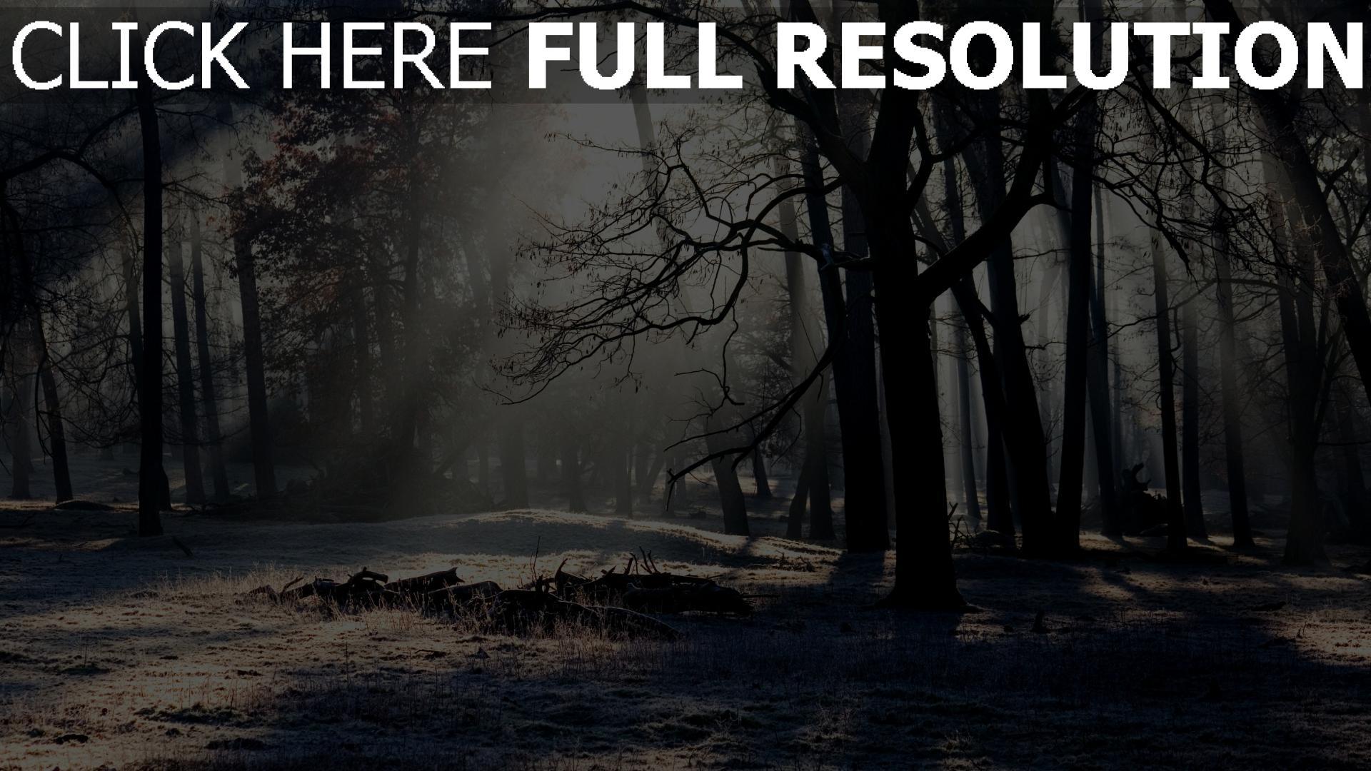hd hintergrundbilder bäume wald winter frost kälte licht 1920x1080