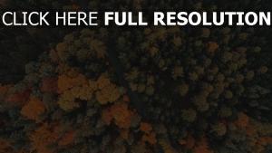 bäume herbst straße wald hoch