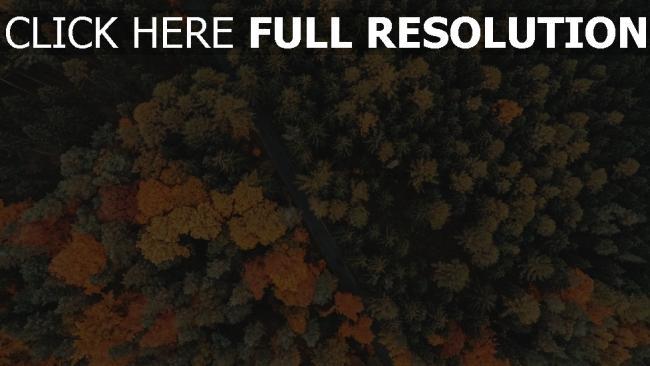 hd hintergrundbilder bäume herbst straße wald hoch