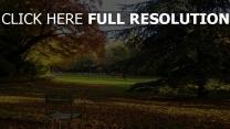 park bäume blätter kiefer herbst frankreich