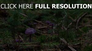 wald moos pilze pflanzen rinde tannennadeln