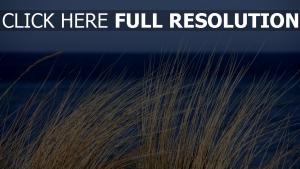 pflanze gras das meer wind