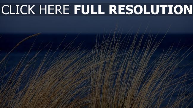 hd hintergrundbilder pflanze gras das meer wind