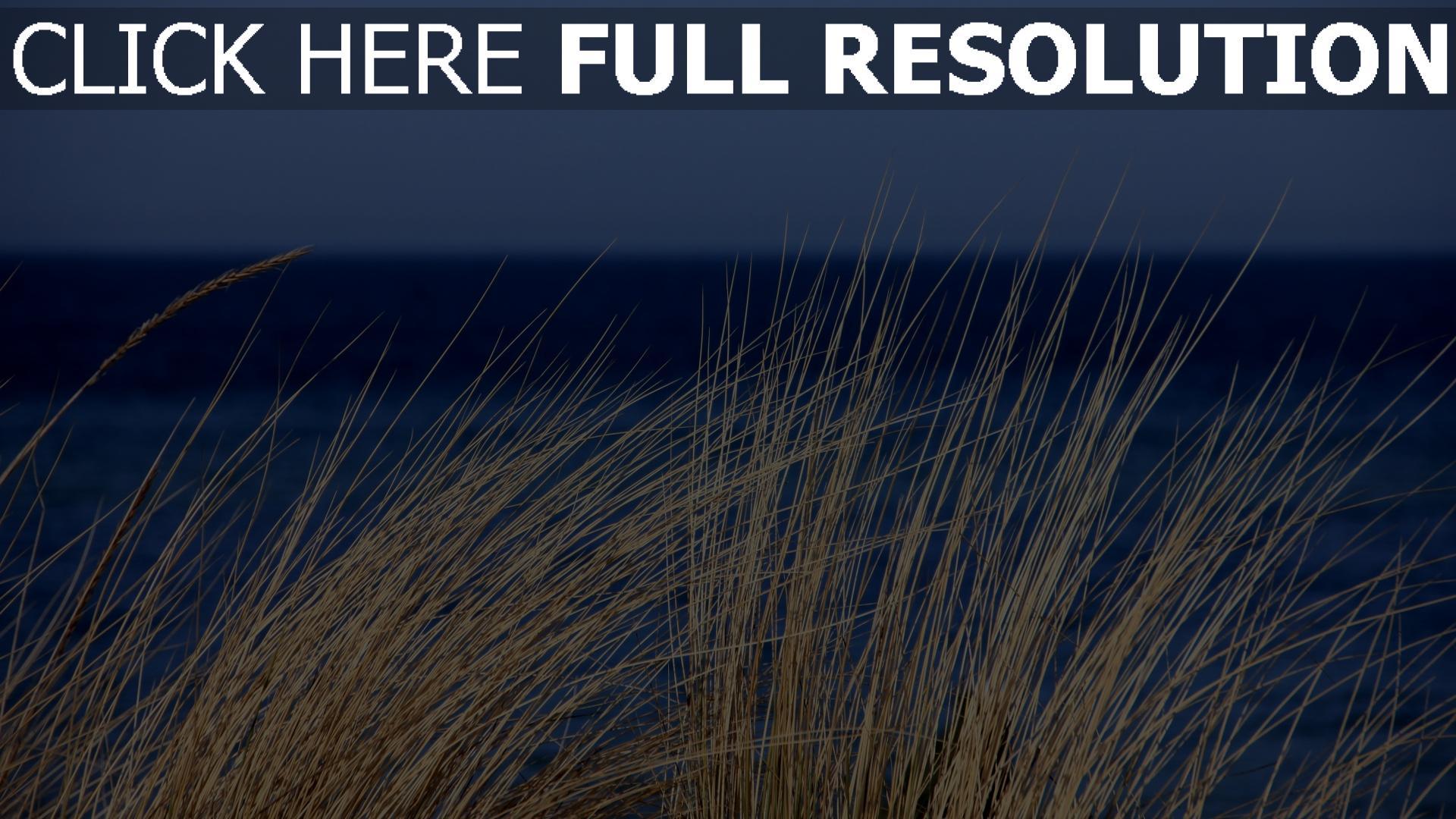 hd hintergrundbilder pflanze gras das meer wind 1920x1080