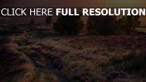 feld straße bäume lavendel blüte licht sonnenuntergang