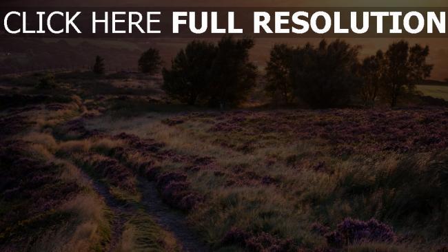 hd hintergrundbilder feld straße bäume lavendel blüte licht sonnenuntergang