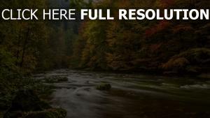 fluss bäume fließen herbst blätter