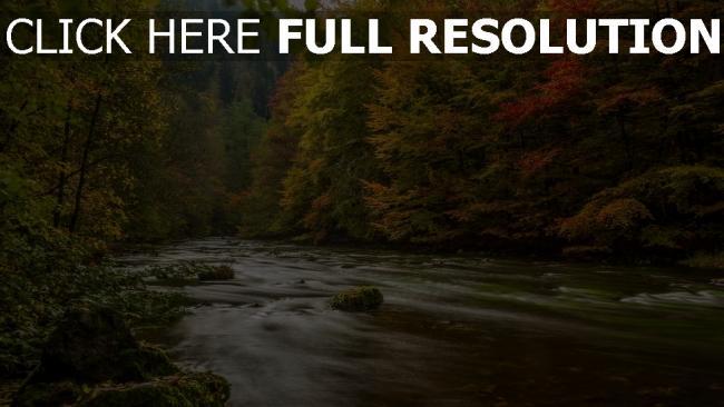 hd hintergrundbilder fluss bäume fließen herbst blätter