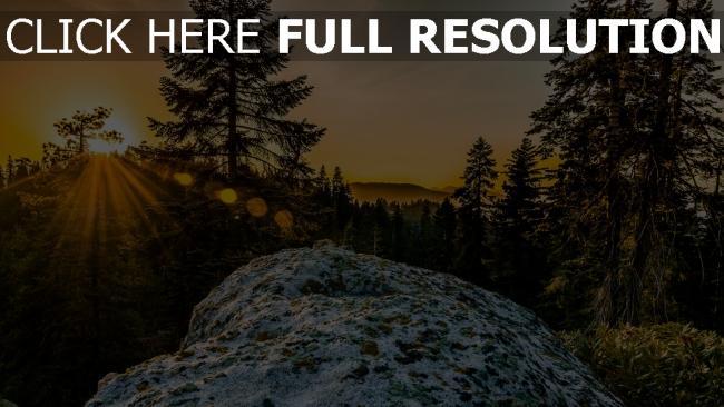 hd hintergrundbilder berge hügel sonnenuntergang strahlen kiefer