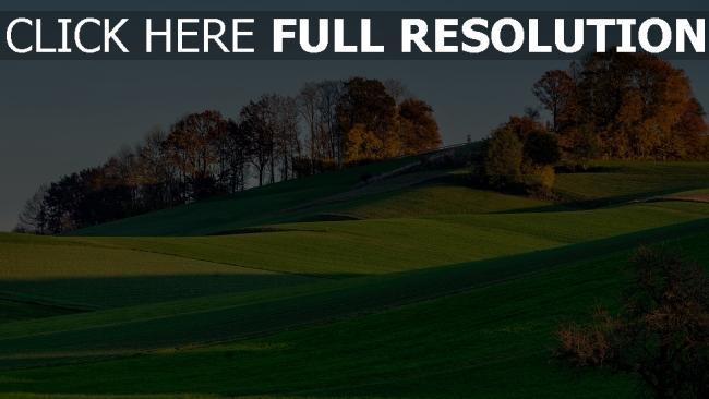 hd hintergrundbilder hügel bäume gras holz herbst