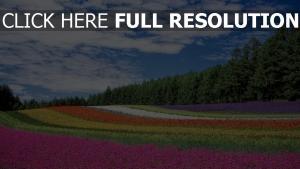 gras frühling blüte wiese wald