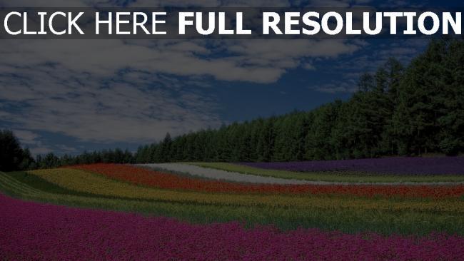 hd hintergrundbilder gras frühling blüte wiese wald