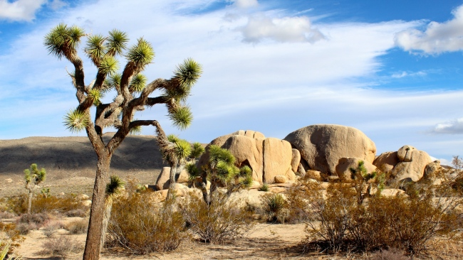 hd hintergrundbilder sand kaktus mojave sand nationalpark
