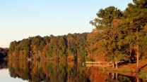 wald bäume herbst reflexion see