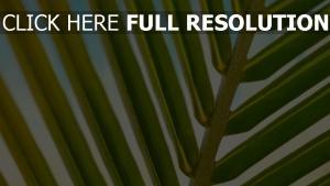 zweig blätter palme close-up