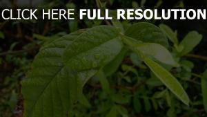blätter zweig tau pflanze