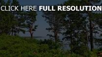 bäume sträucher sommer meer hügel litauen