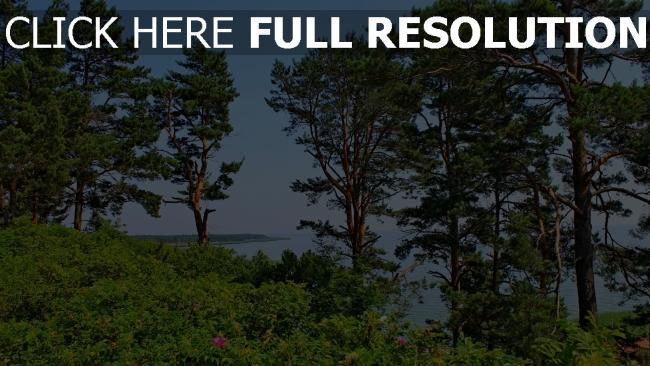 hd hintergrundbilder bäume sträucher sommer meer hügel litauen