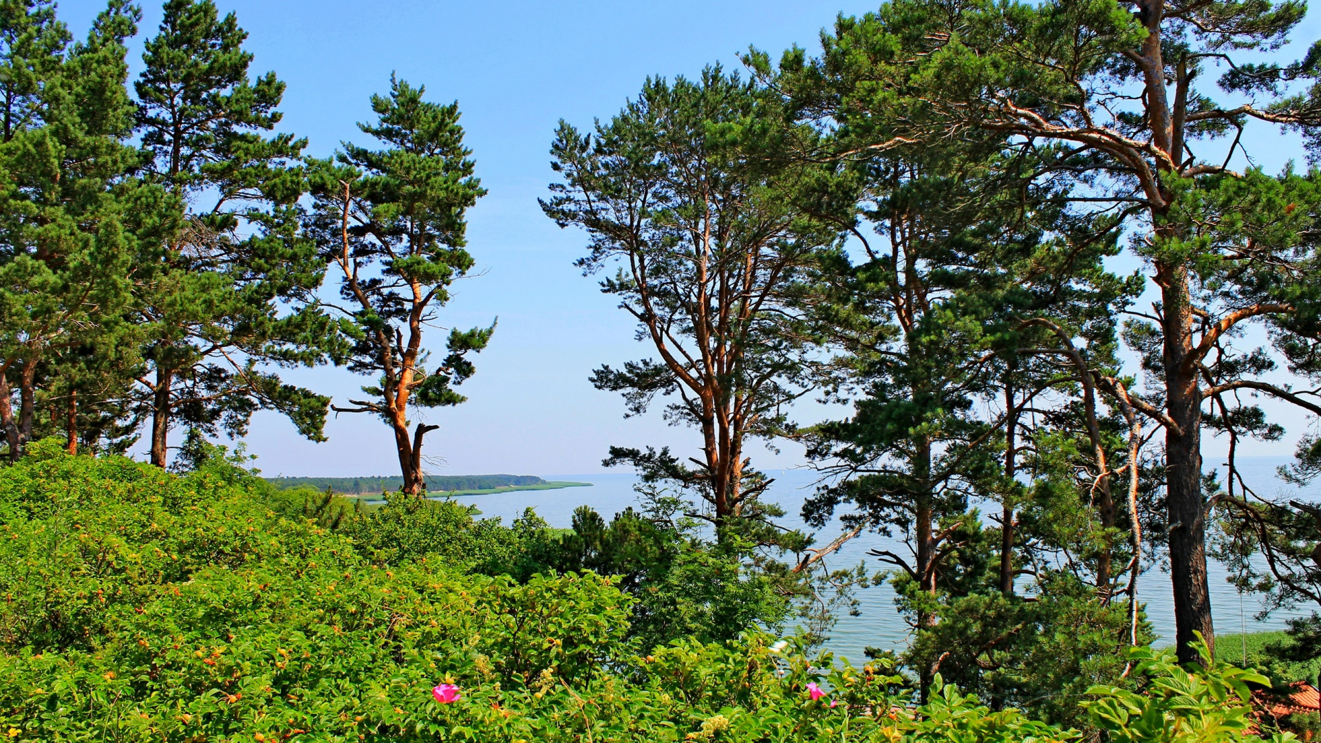 hd hintergrundbilder bäume sträucher sommer meer hügel litauen 1920x1080