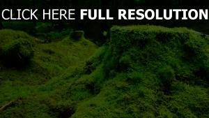 wald stumpf gras moos