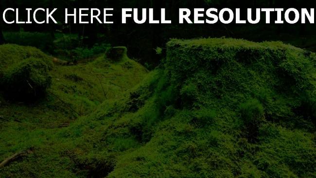 hd hintergrundbilder wald stumpf gras moos
