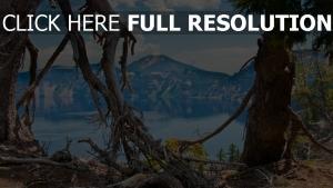 bäume äste wurzeln see berg tal