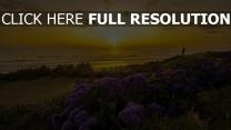 strand blume busch pazifik sonnenuntergang sonne