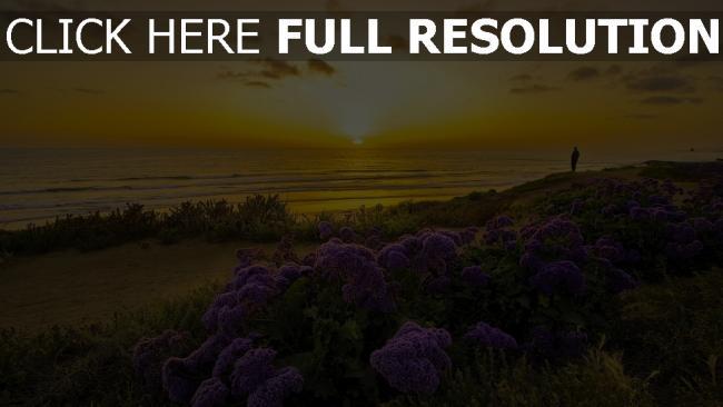 hd hintergrundbilder strand blume busch pazifik sonnenuntergang sonne