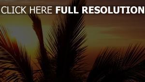 himmelsonnenuntergang baum äste sonne licht orange