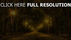 bäume park gasse straße nacht